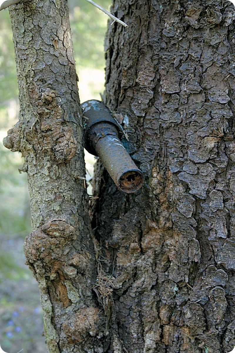Находки в лесу война, клад, находка, раскопки
