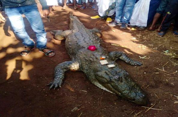 В Индии более 500 человек проводили крокодила в последний путь