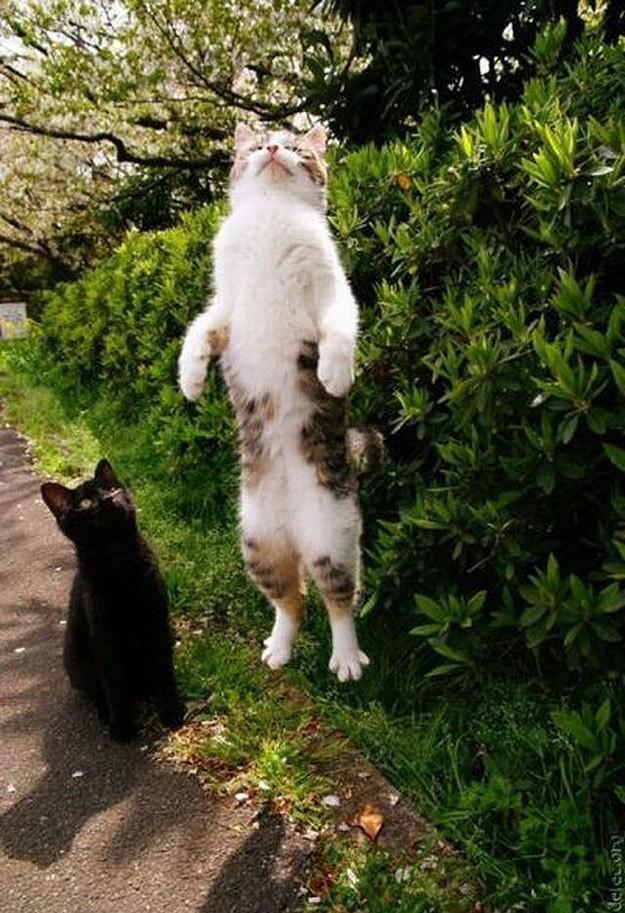 lolcats81 100 лучших фотографий кошек всех времен и народов