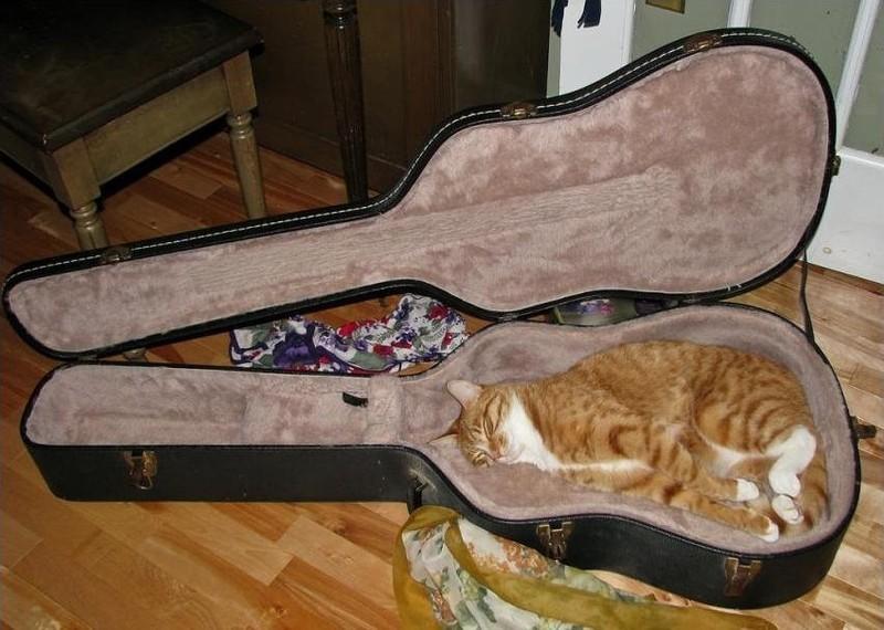 sleepingcats05 Коты, познавшие науку сна