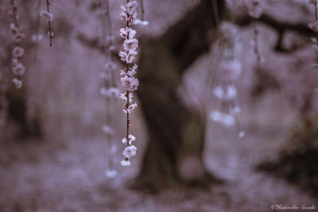 Фотографии, которые помогут услышать тишину