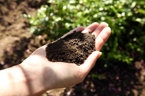 Как сделать черную землю на своих грядках: личный опыт