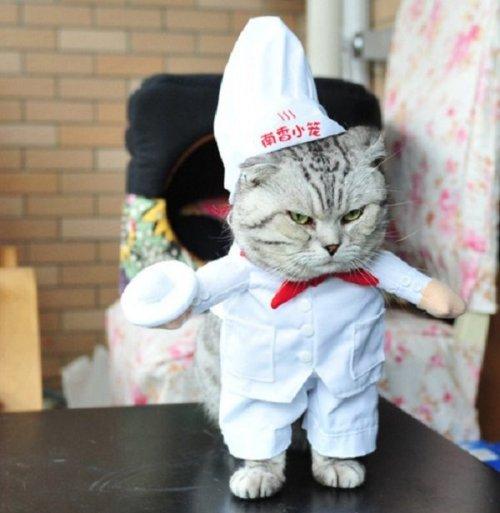 Кошки, у которых явные способности к кулинарии
