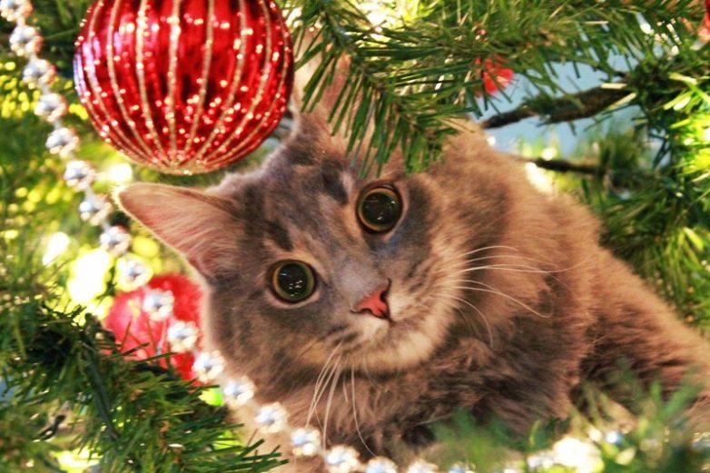 50 котеек, которые помогают наряжать елку и делают Новый год незабываемым