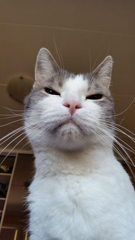 25 кошек, замысливших недоброе...