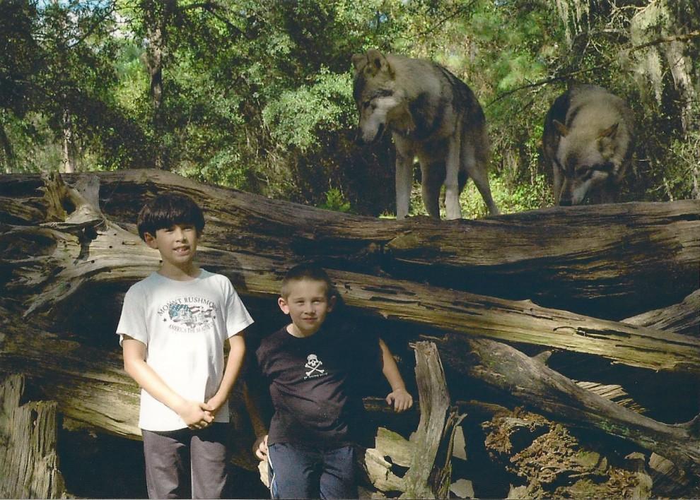 Туристический отдых среди волков