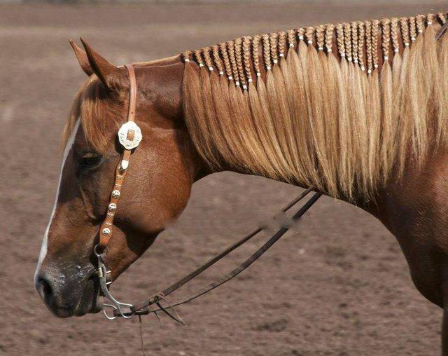 15 лошадок с очень красивыми прическами