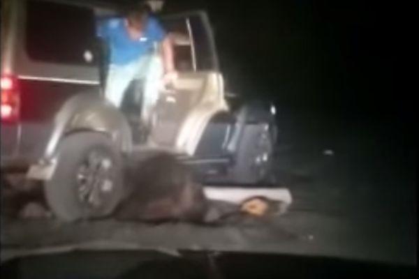 Издевательства над медведем: живодеры найдены – еще одно видео