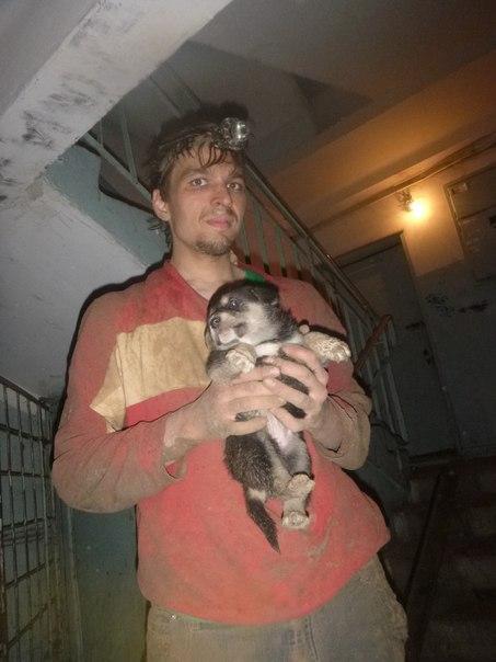 Командой спасения животных из лабиринта узких нор  спасен щенок.
