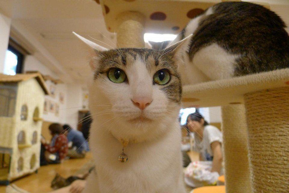 catcafe05 Самые необычные «кошачьи» кафе из разных стран мира