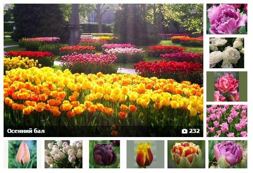 Не пропустите! Тюльпаны! Осенний бал!