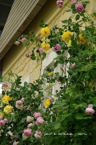 Розы в саду идеи