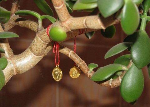 Толстянка или «Денежное дерево». Вырастить и разбогатеть! Цветок спатифиллум (уход и выращивание)