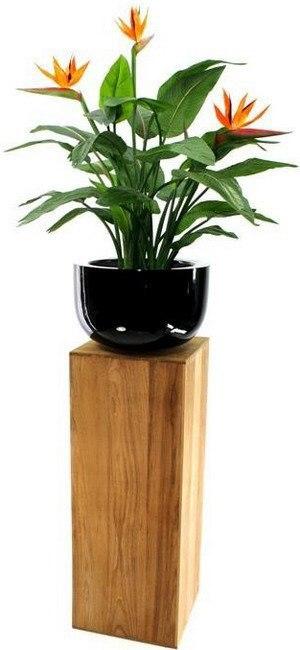Стрелиция (Strelitzia): уход, выращивание.