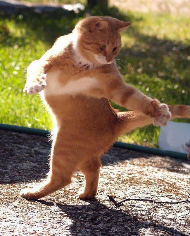 Танцевальные навыки этих животных заставят вас нервно курить в сторонке