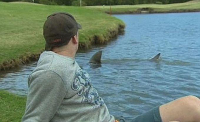 12. А это наблюдали на поле для гольфа в Брисбене, Австралия. животные, природа