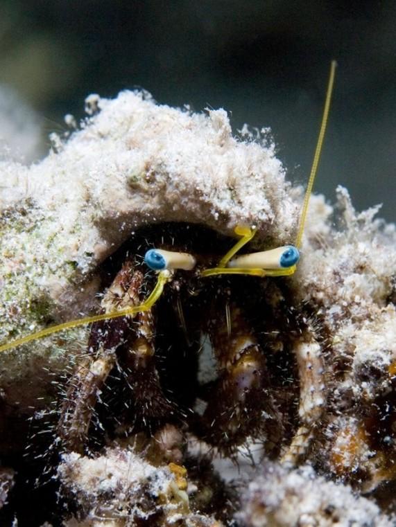 Красота подводного мира Николаса Самараса (Nicholas Samaras)