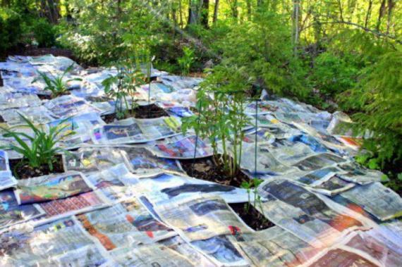 газета для мульчевания 2: Органическое земледелие, пермакультура