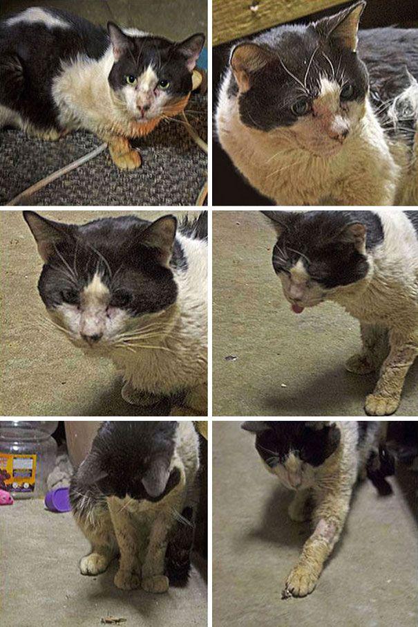 Удивительное преображение бездомного кота, который был спасён от верной гибели