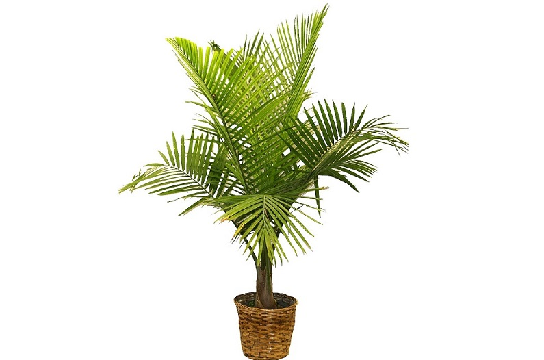 Экзотическое растение домашних условиях