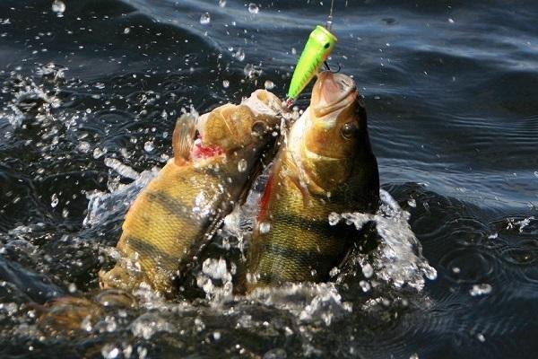 На что подкармливать рыбу в весенний, летний период