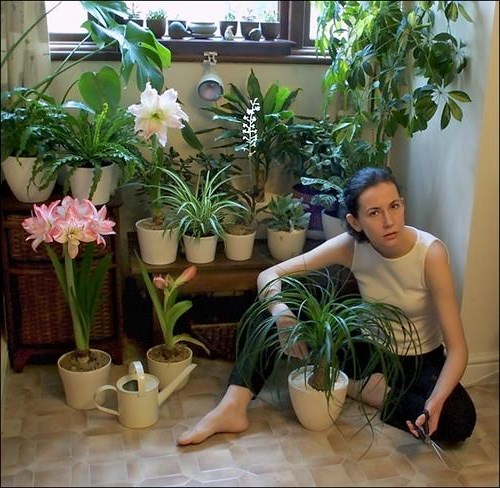 какие горшечные цветочки необходимо держать дома