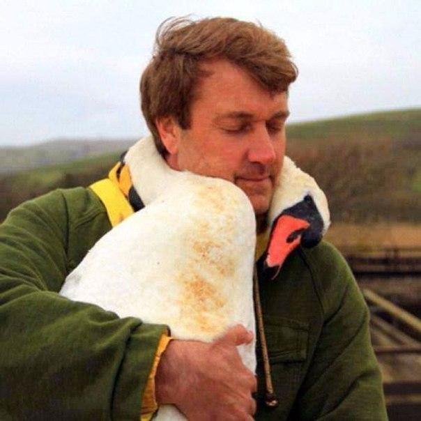 При операции по спасению раненых птиц лебедь обвился вокруг шеи спасателя.