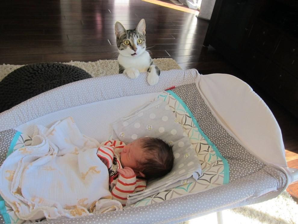 Пара забыла предупредить кошку о пополнении в их семье кошка, малыш, новость, реакция