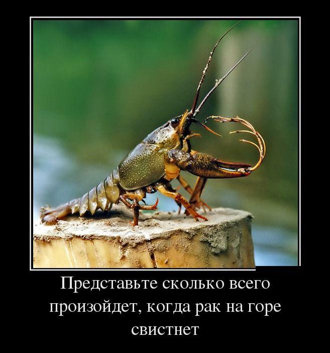 99px_ru_photo_221672_rak_sidit_na_penke_predstav_skolko_vsego_proizojdet