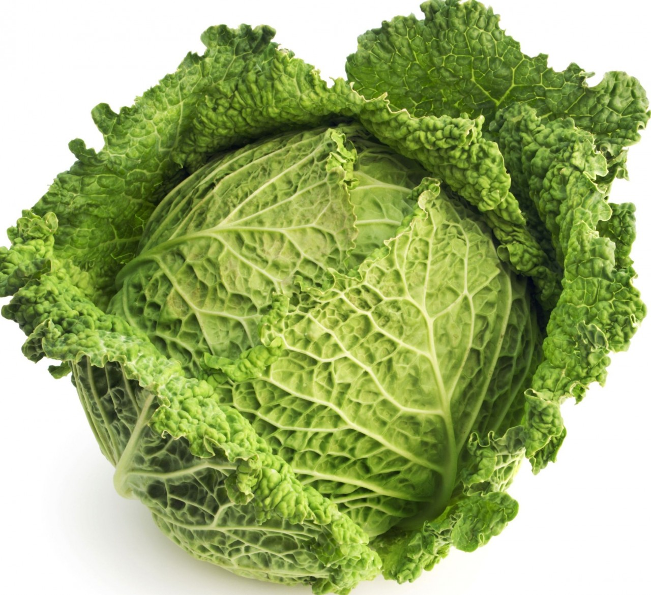 cabbage_1__