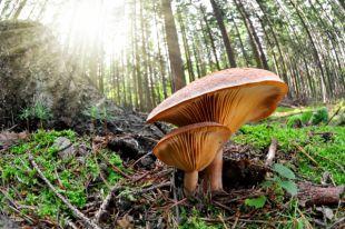 Пора по грибы. Правила безопасности