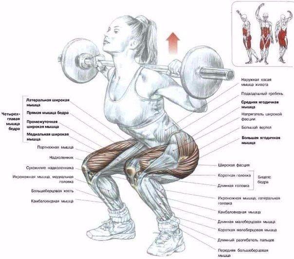 как правильно приседать чтобы похудеть в ногах