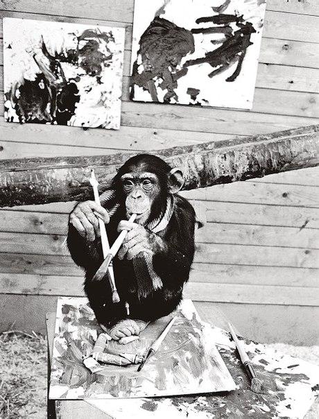 Как шимпанзе оконфузила мир искусства
