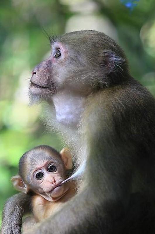 primate2 530x800 Тайский заповедник дикой природы Phu Khieo