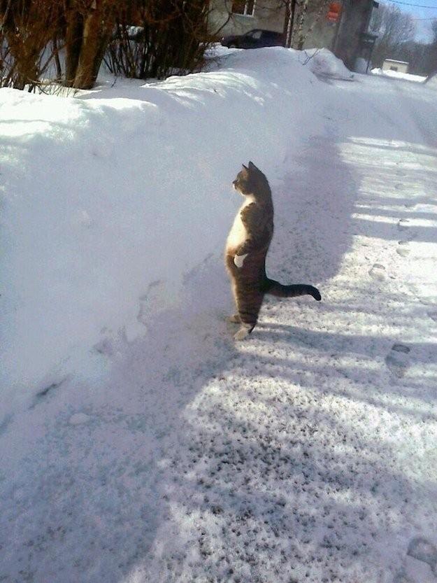 lolcats71 100 лучших фотографий кошек всех времен и народов