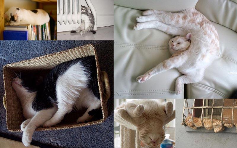 BIGPIC51 25 кошачьих поз для сна
