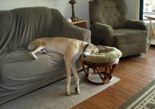 Глубокий собачий сон