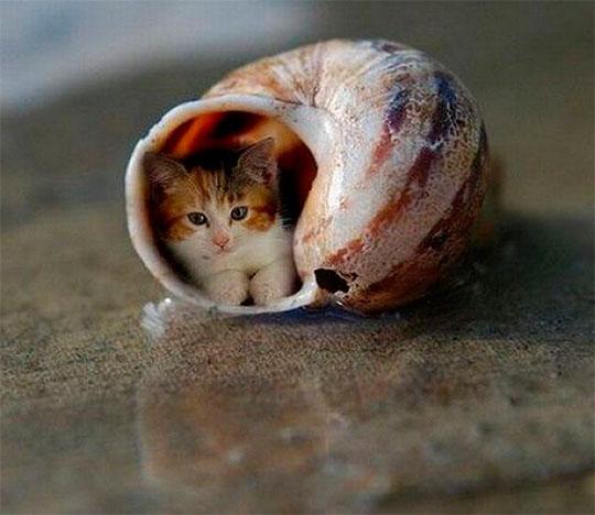 приколы про животных картинки фото видео