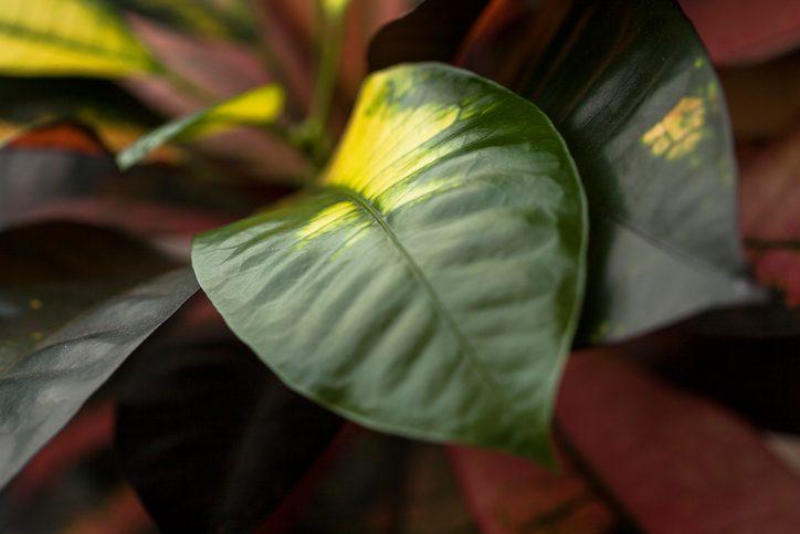 Что делать, если листья комнатных растений пожелтели?