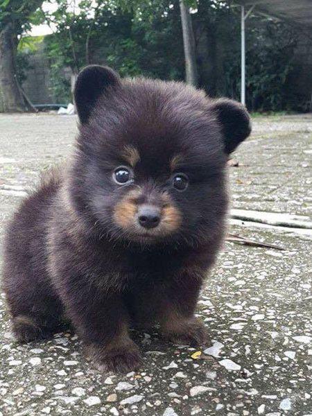 Он принес домой щенка, но не догадывался, кто вырастет ... Такого от домашнего животного не ожидал никто!