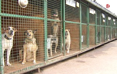 В Новодевичьем парке пройдет выставка собак из московских приютов
