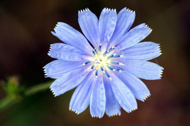 Цвет настроенья синий