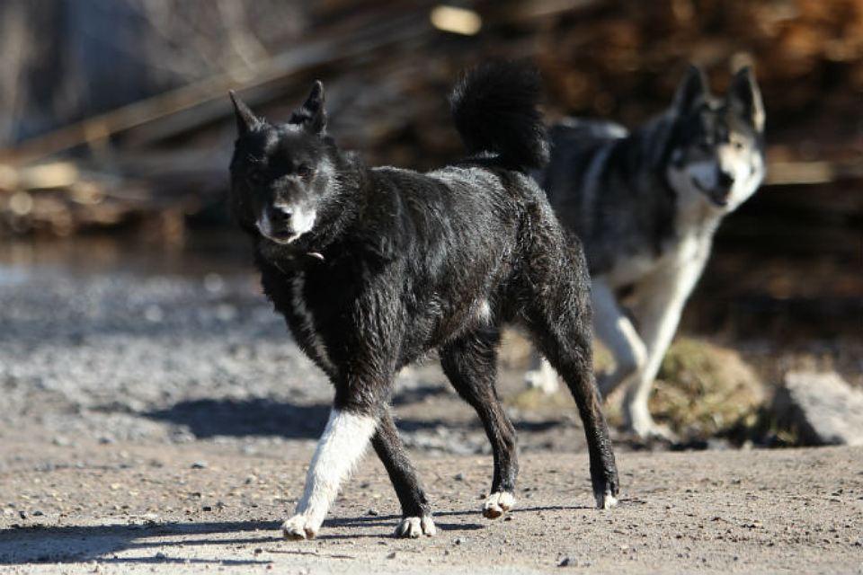 Мужчина увидел собак, окруживших одеяло, но то что они охраняли, поразили его!