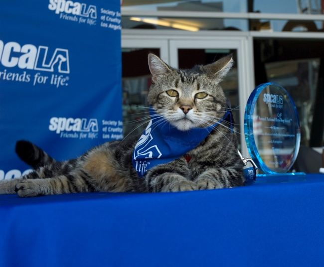 Впервые в истории кошка-спасатель получила медаль «Собака-герой»