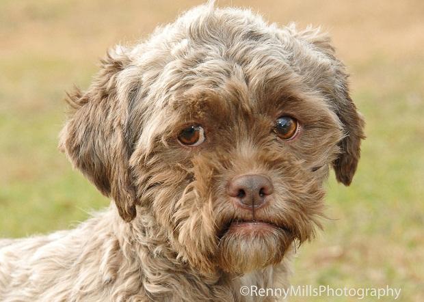 Обнаружен уникальный пес с человеческим лицом