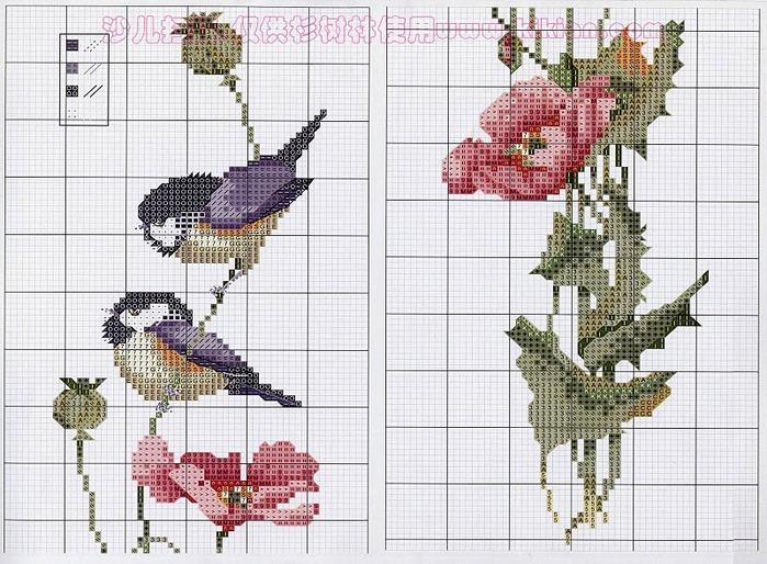 цветы, птицы