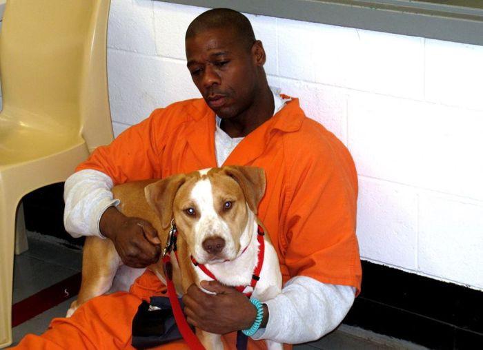 В одной из тюрем США заключенным разрешили брать на воспитание бездомных собак заключенные, собаки, тюрьма