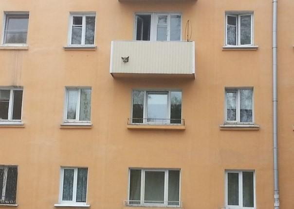 4. У кого-то очень заботливый хозяин балкон, дизайн, креатив