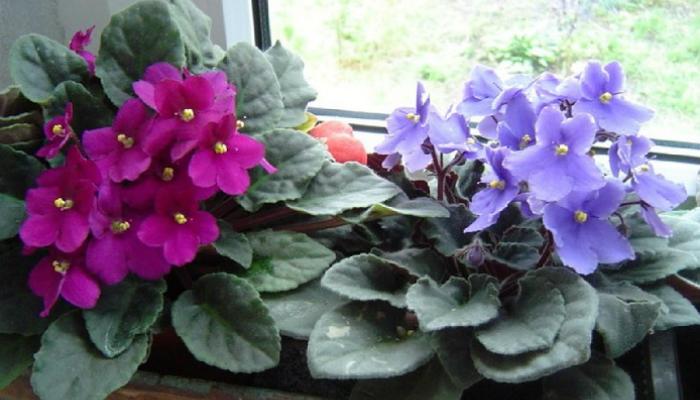 Три простейших трюка для здоровья комнатных растений. Они оживут и зацветут