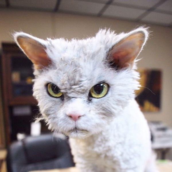 Альберт – самый суровый кот в мире